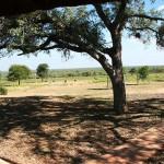 Marula Trees