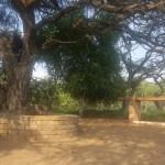 Camelthorn picnic site matlabas river